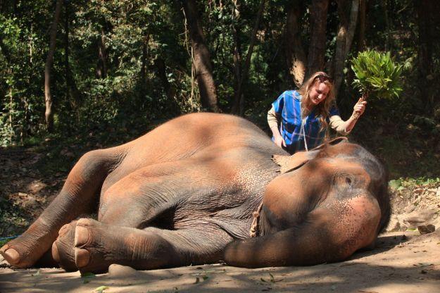 Brushing your elephant